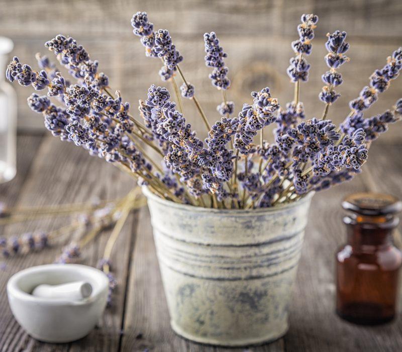 lavendar flowers in metal bucket